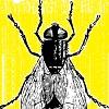 Molesta mosca