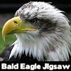 Águila calva Jigsaw