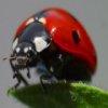 Escarabajos Jigsaw