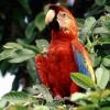 Aves Jigsaw