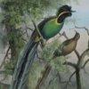 Aves del Paraíso Jigsaw