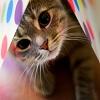 Gato realmente lindo 3