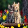 Cats – 1 Puzzle