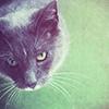 Gato colorido rompecabezas