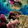 Arrecifes de Coral Jigsaw