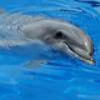 Dolphins And Other Marine Mammals Puzzle – 1