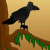 Final foolish crow
