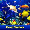 Encuentra peces. Encuentra objetos