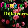 Flores Diferencias