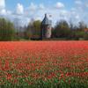 Holanda Jigsaw