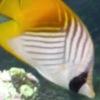 Jigsaw pescado