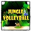 Selva Voleibol