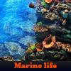 Vida marina. Encuentra objetos