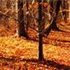 Hojas de naranja en el otoño de Jigsaw Puzzle