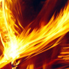 Phoenix pluma