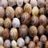 Conchas de caracol deslizante