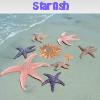 Las estrellas de mar. Encuentra objetos