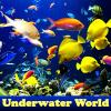 Mundial de Actividades Subacuáticas