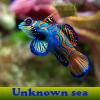 Desconocido mar. Encuentra objetos