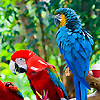 Objetos Zoo ocultos