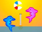 Dolphin Voleibol